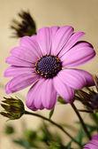Fiore viola — Foto Stock
