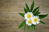 Blumenstrauß aus drei gänseblümchen — Stockfoto