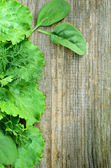 Old wood with lettuce, parsley, dill and spinach — Stock Photo