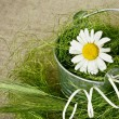 Chamomile in a bucket — Stock Photo #28942057