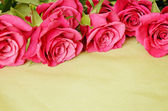 Roses on green background — Stock Photo