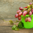 Grapes in a children's plastic bucket — Stock Photo