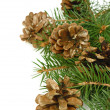 Christmas tree branch with cones — Stock Photo
