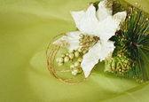 Poinsecja włókienniczych biały — Zdjęcie stockowe