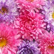 Pink and purple asters — Stock Photo