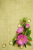 Pink asters composition — Stock Photo