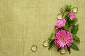 Pink asters composition — Stockfoto