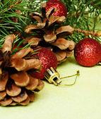Christmas tree branch — Стоковое фото