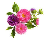 Asters composition — Stock Photo
