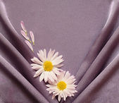 Purple satin fabric with daisies — Stockfoto