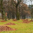 Autumn park with fallen leaves — Stock Photo
