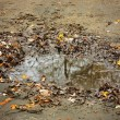 Autumn puddle — Stock Photo