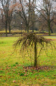 Small tree on a background of park — Stock Photo