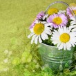 Rural composition with daisies — Stock Photo