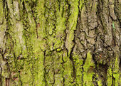 Green tree bark — Stock Photo