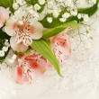 Foto de Stock  : Bouquet of flowers on white lace
