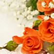 Foto de Stock  : Roses on white background