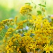 Stock Photo: Bouquet with tansy