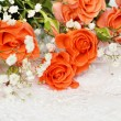 Stock Photo: Orange roses on white