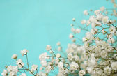White flowers on blue background — Stock Photo