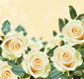 Roses on peach backround — Stock Photo