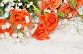 白底橙色玫瑰 — 图库照片