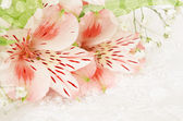 Pink flowers for wedding — Foto Stock