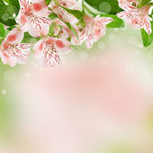 Alstroemeria flowers on spring background — Stock fotografie