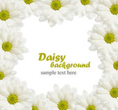 Daisy flowers frame — Stock Photo