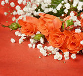 Roses on orange background — Stock Photo