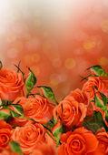 Rose arancio — Foto Stock