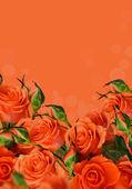 оранжевые розы — Стоковое фото