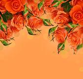 Roses orange — Photo