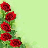 красные розы цветы — Стоковое фото