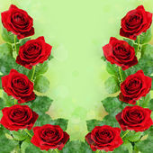 Red rose flowers — Foto Stock