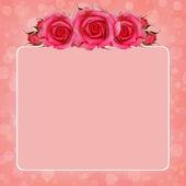 粉红色背景与月季花 — 图库照片