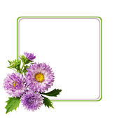 Aster flowers composotion and frame — 图库照片