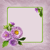 Aster flowers composotion and frame — Zdjęcie stockowe