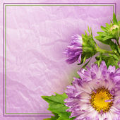 Aster flower composotion  — Stock Photo