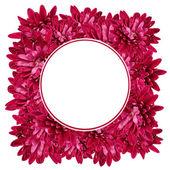 Cadre avec des fleurs d'aster — Photo