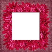 Frame with aster flowers — Stock Photo
