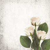 White roses on vintage background — Stock Photo