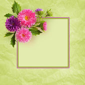Aster flowers composition and frame — Stock Photo