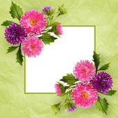 Aster flowers composition and frame — Zdjęcie stockowe