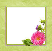 Aster flowers composition and frame — Photo