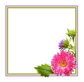 Aster flowers composition and frame — Стоковое фото