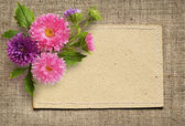 Paper card and aster flowers — Stock Photo