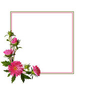 Aster flowers composition and frame — 图库照片