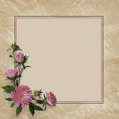 Aster flowers composition and frame — Foto Stock