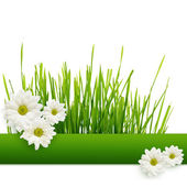 Grass and daisies — 图库照片